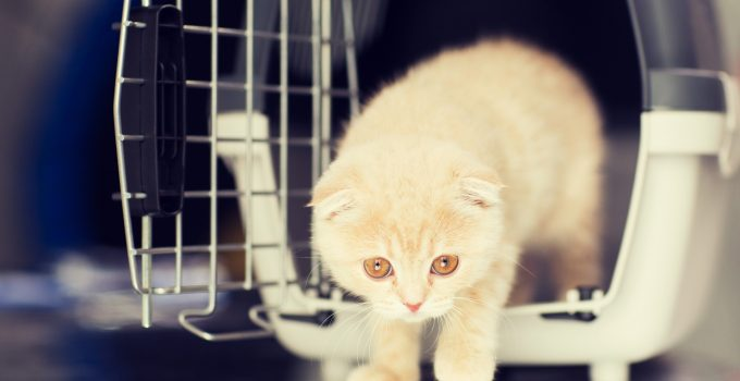5 Tips for Choosing the Right Size for your Cat Crate/Cat Cage