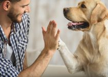 Tips For Keeping Your Paralyzed Dog Happy And Healthy – 2021 Guide