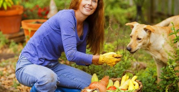 How To Know Which Fruits And Vegetables Your Dog Can And Can't Eat?