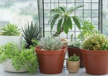 How to Grow a Succulent from Seeds? – 2021 Guide