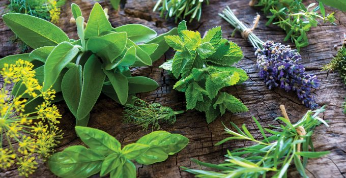 10 Sensational Herbs For Your Fascinating Home Herb Garden