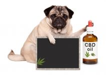 Ailments that Can be Treated by CBD Oil for Dogs
