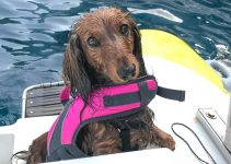 Are Dogs Required To Have Life Jackets On Boats?