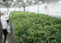 7 Signs Your Cannabis Company Needs A Better Business Plan