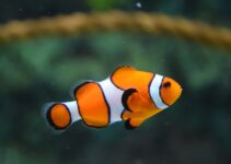 5 Tips To Keep Your Fish Tank Clean And Safe