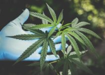 How the CBD Industry Has Changed for the Better – 2021 Guide